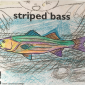 Striped bass colored by a child on coloring sheet